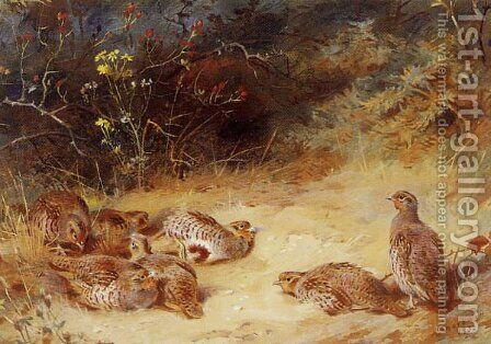 Autumn Partridge Dusting by Archibald Thorburn - Reproduction Oil Painting