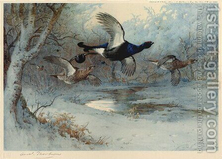 Blackcock Through the Silver Birches by Archibald Thorburn - Reproduction Oil Painting