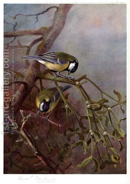 Great Tits and Mistletoe by Archibald Thorburn - Reproduction Oil Painting