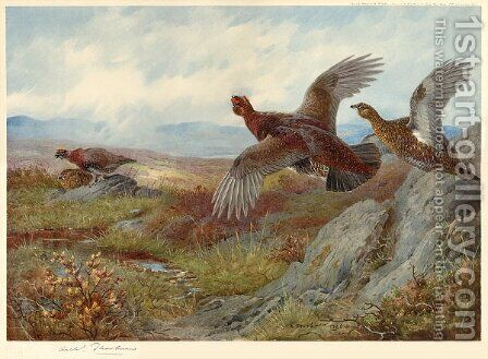 Grouse Over the Moor by Archibald Thorburn - Reproduction Oil Painting