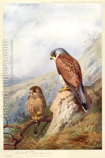 Kestrel by Archibald Thorburn - Reproduction Oil Painting