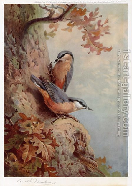 Nuthatches by Archibald Thorburn - Reproduction Oil Painting