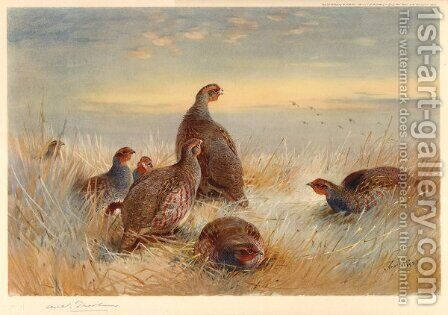 Partridges in the Stubble by Archibald Thorburn - Reproduction Oil Painting