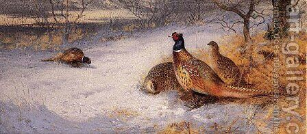 Pheasants in the Snow by Archibald Thorburn - Reproduction Oil Painting