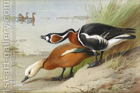 Ruddy Shelduck and Red-Breasted Goose by Archibald Thorburn - Reproduction Oil Painting