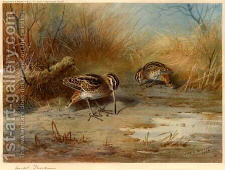Snipe Probing by Archibald Thorburn - Reproduction Oil Painting