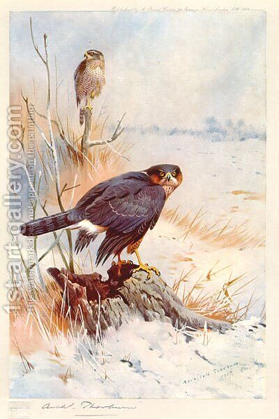Sparrowhawk by Archibald Thorburn - Reproduction Oil Painting