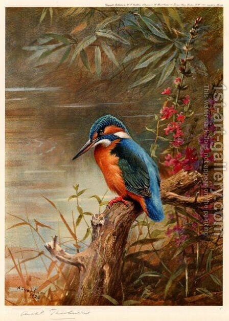Summer Kingfisher by Archibald Thorburn - Reproduction Oil Painting
