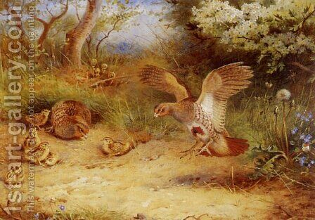 Summer Partridge and Chicks by Archibald Thorburn - Reproduction Oil Painting