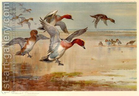 Wigeon Alighting by Archibald Thorburn - Reproduction Oil Painting