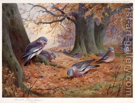 Wood Pigeon on Beech Mast by Archibald Thorburn - Reproduction Oil Painting