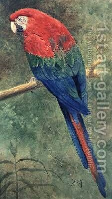Red and Blue Macaw by Henry Stacy Marks - Reproduction Oil Painting