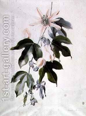Clematis by - Marie-Anne - Reproduction Oil Painting