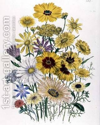 Daisies plate 31 from The Ladies Flower Garden by Jane Loudon - Reproduction Oil Painting