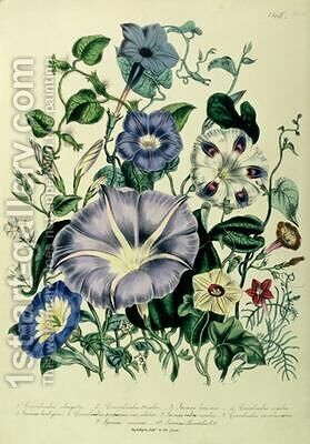 Bindweed plate 26 from The Ladies Flower Garden by Jane Loudon - Reproduction Oil Painting