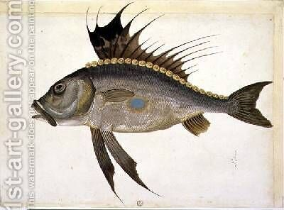 Fish by Jacopo Ligozzi - Reproduction Oil Painting
