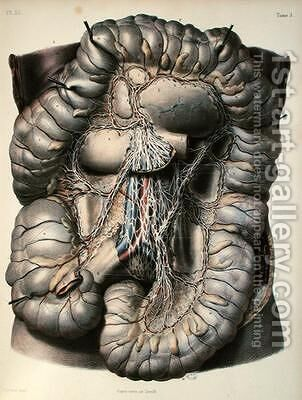 The nerves of the large intestine by (after) Leveille - Reproduction Oil Painting