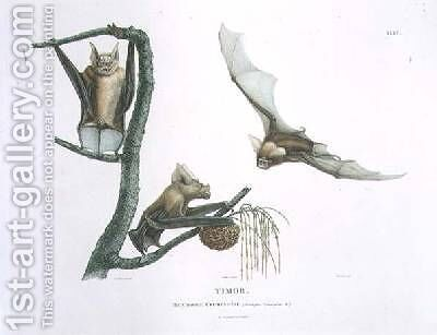 Rhinolophus Crumeniferus a Horseshoe Bat by (after) Lesueur, Charles Alexandre - Reproduction Oil Painting