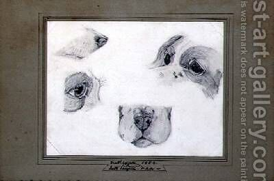 Studies of the Artists Dog by (attr. to) Leighton, Frederic - Reproduction Oil Painting