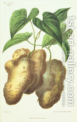 Dioscorea decaisneana Yam by (after) Lefebvre or Lefevre, Adolphe - Reproduction Oil Painting