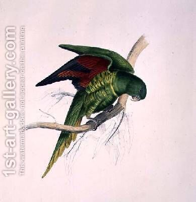 Matons Parakeet by Edward Lear - Reproduction Oil Painting