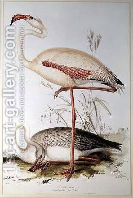 Flamingo by Edward Lear - Reproduction Oil Painting