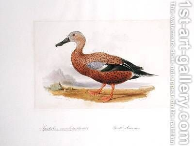 Spatula maculata by Edward Lear - Reproduction Oil Painting