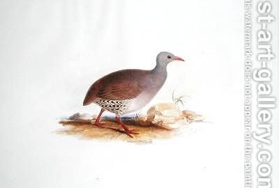 Grey Grouse by Edward Lear - Reproduction Oil Painting