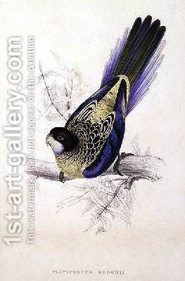 Platycercus Brownii or Browns Parrakeet by Edward Lear - Reproduction Oil Painting