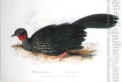 Penelope purpurascens by Edward Lear - Reproduction Oil Painting