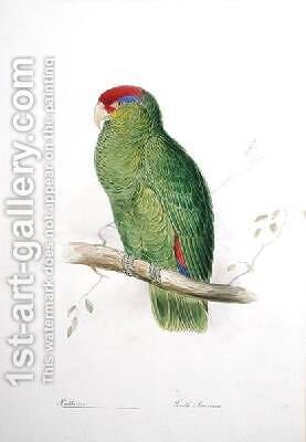 Psittacus 3 by Edward Lear - Reproduction Oil Painting