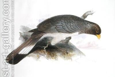 Chizarthis Zonurus by Edward Lear - Reproduction Oil Painting