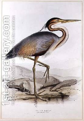Purple Heron by Edward Lear - Reproduction Oil Painting