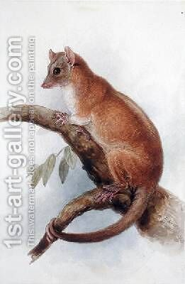 Lord Derbys Woolly Opossum by Edward Lear - Reproduction Oil Painting