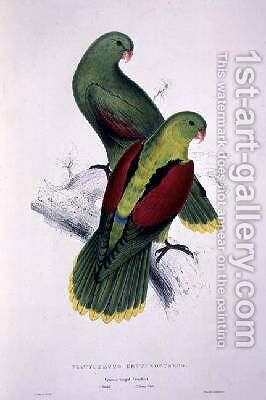 Crimson-Winged Parakeet by Edward Lear - Reproduction Oil Painting