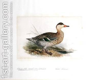 Querquedula maculirostris by Edward Lear - Reproduction Oil Painting