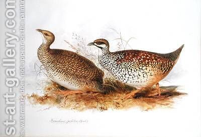 Francolinus perlatus by Edward Lear - Reproduction Oil Painting