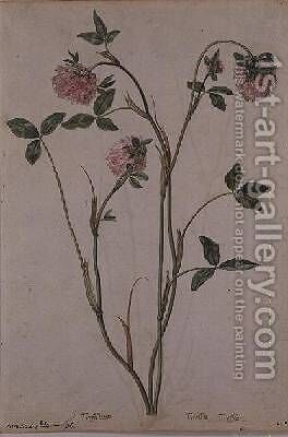 Triflorium pratense by Jacques (de Morgues) Le Moyne - Reproduction Oil Painting