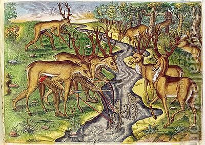 Stag Hunt by (after) Le Moyne, Jacques (de Morgues) - Reproduction Oil Painting
