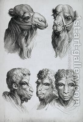 Similarities Between the Head of a Camel and a Man by (after) Le Brun, Charles - Reproduction Oil Painting