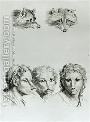 Similarities Between the Head of a Fox and a Man by (after) Le Brun, Charles - Reproduction Oil Painting