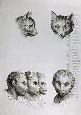 Similarities Between the Head of a Cat and a Man by (after) Le Brun, Charles - Reproduction Oil Painting