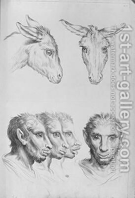 Similarities Between the Head of a Donkey and a Man by (after) Le Brun, Charles - Reproduction Oil Painting