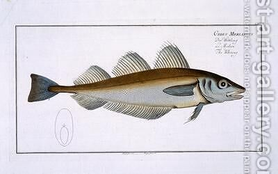 Whiting Gadus Merlangus by Andreas-Ludwig Kruger - Reproduction Oil Painting