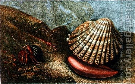 Cardum Rusticum and Pagurus Bernhardi in a Periwinkle Shell by Charles Kingsley - Reproduction Oil Painting
