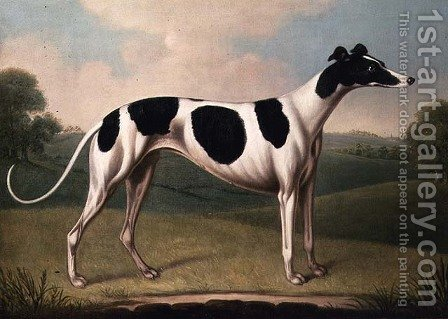 Greyhound by Benjamin Killingbeck - Reproduction Oil Painting