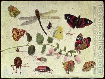 Butterflies Insects and Flowers by Jan van Kessel - Reproduction Oil Painting
