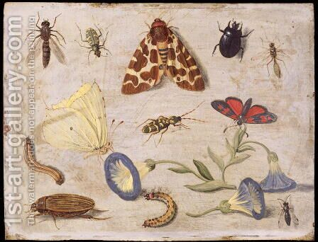 Insects 7 by Jan van Kessel - Reproduction Oil Painting