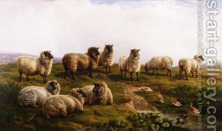 Welsh Black Faced Sheep by Charles Jones - Reproduction Oil Painting