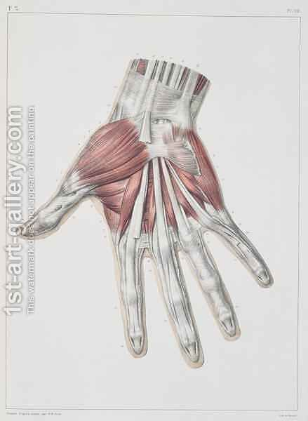 Musculature of the hand by (after) Jacob, Nicolas Henri - Reproduction Oil Painting